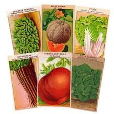 cheap seed packets seed packets ebay