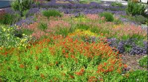 xeriscaping perennials and annual flowers 7 231