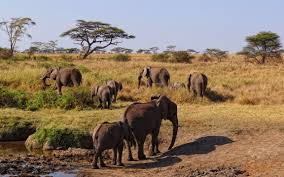 african safari animals african safari wildlife destination ideas and inside scoop