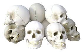 halloween skull transparent background skull transparent background images reverse search