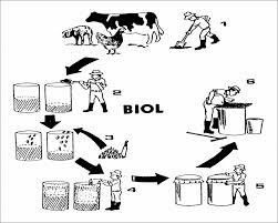 ap biology essays 2009 mitosis essay free