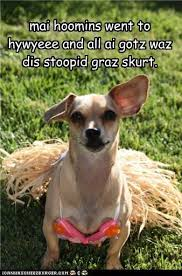 Disappointed Dog Meme - i has a hotdog skirt funny dog pictures dog memes puppy