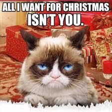 Cat Christmas Memes - grumpy cat christmas memes comics and memes