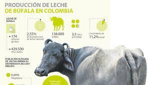 cual fue el aumento en colombia para los pensionados en el 2016 portal lechero colombia durante 2017 la producción de leche de