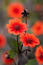 Flower Image 236 Best Flower Pictures Images On Pinterest Plants Flowers And
