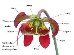 style flower wikipedia potd column september 4 2006 wikipedia