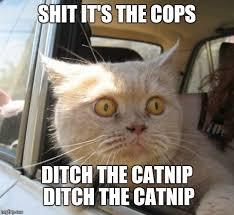 Scared Cat Meme - scared cat memes imgflip
