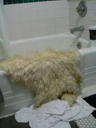 Sheepskin Rug Cleaning How To Clean And Wash A Natural Sheepskin Rug Cleaning