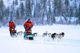 winter tours muktuk adventures sled dog adventures