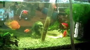fish tank water change aquarium fish care part 1