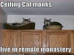 Ceiling Cat Meme - pretty ceiling cat wallpaper site wallpaper site