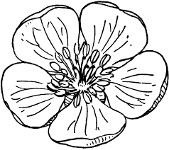 printable large flowers large flower drawing at getdrawings com free for personal use
