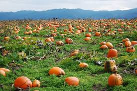 Pumpkin Patch St Louis Mo by The 12 Most Charming Pumpkin Patches In Oregon For 2017