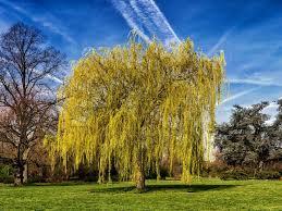 bend like a willow ridge