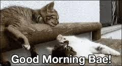 Good Morning Cat Meme - cat memes gifs search find make share gfycat gifs