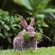 types rabbit hay