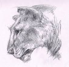 roaring lion sketches archives pencil drawing collection