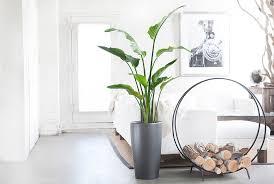 good inside plants inside house plants 18 best indoor plants good inside plants for