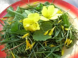 cuisine plantes sauvages comestibles plantes sauvages comestibles du côté du mont ventoux cuisine plurielle