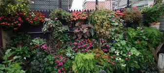 download full shade garden plants solidaria garden
