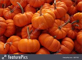 thanksgiving pumpkin decorations holidays pumpkins for thanksgiving or halloween decoration