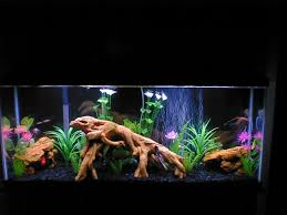 55 gallon aquarium light 55 gallon fresh water tank animals pinterest fresh water tank