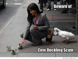 Scam Meme - beware of the cute duckling scam weknowmemes