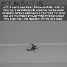 Funny Spider Meme - neighbors thought this man was beating his wife wtf fun fact