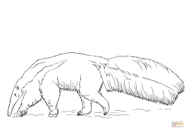 anteater coloring page giant anteater coloring page free printable