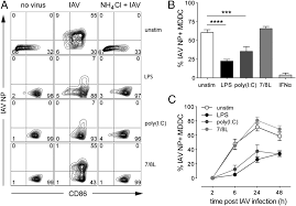 protection of human myeloid dendritic cell subsets against