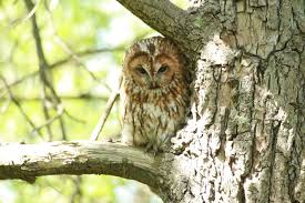 with wise owl sitting in a tree