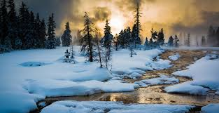 yellowstone s winter wonders the beaten path
