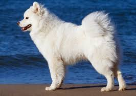 dogs with curly hair and floppy ears 20 dog breeds with curly tails