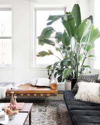 room with plants pin by kelsey knipe on home pinterest plants living rooms and