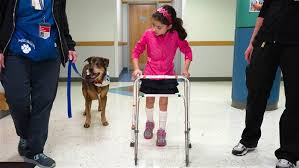 Blind Physical Therapist Dogs With Special Needs Help Kids Heal In Physical Therapy Today Com