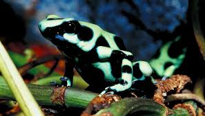 Adaptations Of Tropical Rainforest Plants - how do plants u0026 animals adapt to the rainforest sciencing