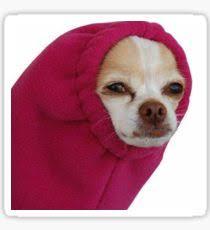 Chihuahua Meme - chihuahua meme gifts merchandise redbubble