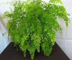 Low Light Indoor Trees 168 Best House Plants Images On Pinterest Indoor Plants Indoor