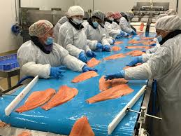 miami production marine harvest to more than miami production with new plant