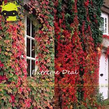 online buy wholesale plants creeper from china plants creeper