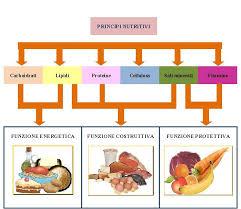 glucidi alimenti organismo umano e alimenti