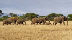 the war on elephants bbc news