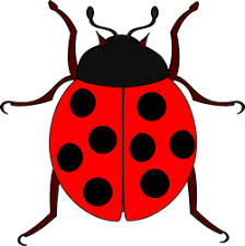 ladybug tattoo designs in 2017 real photo pictures images and