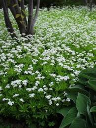 Fragrant Shade Plants - shade wet clay and short late summer bees and butterfly