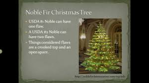noble fir tree why is the noble fir tree so