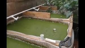 duckweed vertical farming google search 4sf pinterest