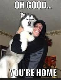 No Just No Meme - funny husky memes that we all love dog n treats