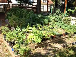 urban permaculture transformation life with nature
