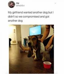 Dog Girlfriend Meme - my girlfriend wanted another dog but i didn t so we compromised and