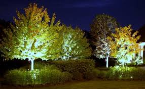Landscape Lighting Trees Instead Of Lights Uplight The Trees Doors Lights And